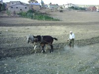 Taşbaşı Köyü - 12