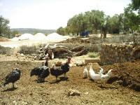 Ayvalıca Köyü - 5